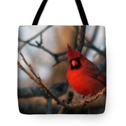 Northern Cardinal Red Beauty  Tote Bag