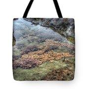 Wintertime At Botanical Beach Tote Bag