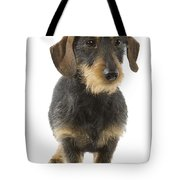 Wire-haired Dachshund Tote Bag