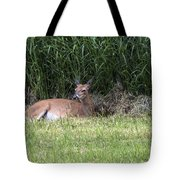 Wisconsin Doe Resting Tote Bag