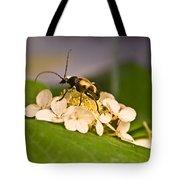 Wise Beetle Tote Bag