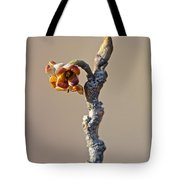 Witch Hazel Springtime Twig - Hamamelis Tote Bag