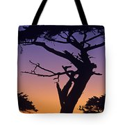 Witch Tree Monterey California Tote Bag
