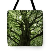 Witness Tree Tote Bag