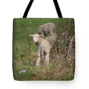 Wittle Wamb Tote Bag