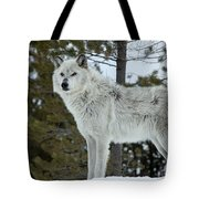 Wolf - Curiousity Tote Bag