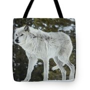 Wolf - Discovery Tote Bag