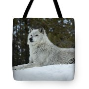 Wolf - Peaked Interest Tote Bag