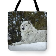 Wolf - Resting Tote Bag