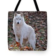 Wolf In Autumn Tote Bag