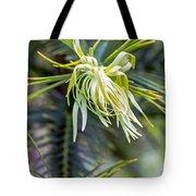 Wollemi Pine Tote Bag