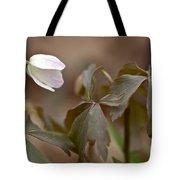 Wood Anemone Wildflower - Anemone Quinquefolia L.  Tote Bag