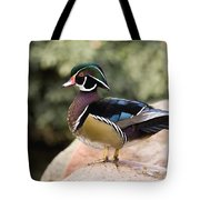 Wood Duck Drake In Breeding Plumage Tote Bag