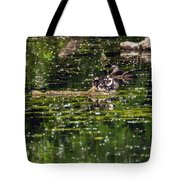 Wood Duck Family Tote Bag