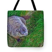 Woodchuck In Salmonier Nature Park-nl Tote Bag