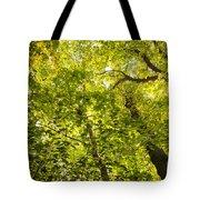 Woodland Background 02 Tote Bag