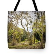 Woodland Glen In The California Vallecito Mountains Tote Bag