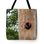 Woodpecker Babies Ready To Explore Tote Bag
