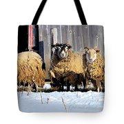 Wooly Sheep In Winter Tote Bag