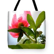 Worm's Eye View Tote Bag