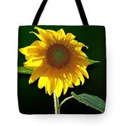 Worshipping The Sun Tote Bag