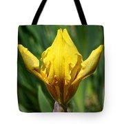 Wow The Dwarf Iris Tote Bag