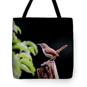 Wren - Carolina Wren - Bird Tote Bag