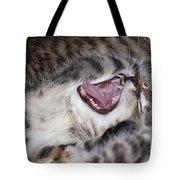 Yawning Kitten Tote Bag