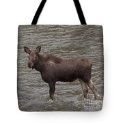 Yearling Moose In The Shoshone River   #1284 Tote Bag