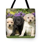 Yellow And Black Labrador Puppies Tote Bag