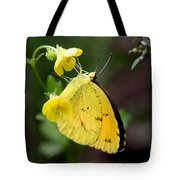 Yellow And Yellow Sulphur Butterfly Tote Bag