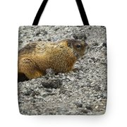 Yellow-bellied Marmot   #5187 Tote Bag