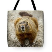 Yellow-bellied Marmot   #5300 Tote Bag
