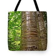 Yellow Birch Near La Chute In Forillon Np-qc Tote Bag