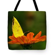 Yellow Cabbage Moth Tote Bag