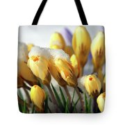 Yellow Crocuses In The Snow Tote Bag