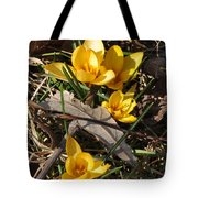 Yellow Crocuses Tote Bag