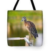 Yellow-crowned Night-heron Portrait Series 3 Tote Bag