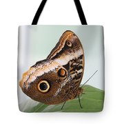 Yellow-edged Giant Owl Butterfly #3 Tote Bag