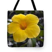 Yellow Flower Of Golden Trumpet Vine Tote Bag