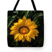 Yellow Gazania Tote Bag