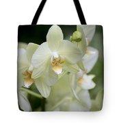 Yellow-green Phalaenopsis 8837 Tote Bag