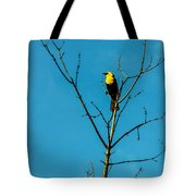 Yellow-headed Blackbird Tote Bag