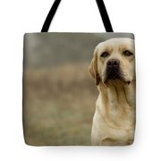 Yellow Labrador Tote Bag