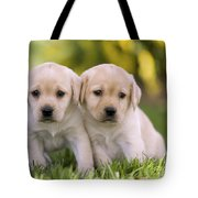 Yellow Labrador Puppies Tote Bag