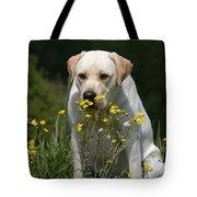 Yellow Labrador Retriever Dog Smelling Yellow Flowers  Tote Bag
