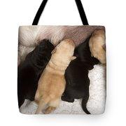 Yellow Labrador Suckling Puppies Tote Bag