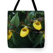 Yellow Lady Slippers On Forest Floor Tote Bag