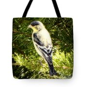 Yellow N Black Finch Tote Bag