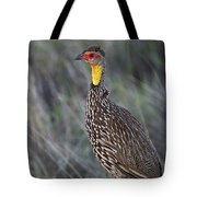 Yellow-necked Francolin... Tote Bag